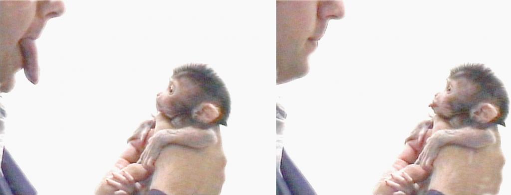 makak_neonatal_imitation (1)