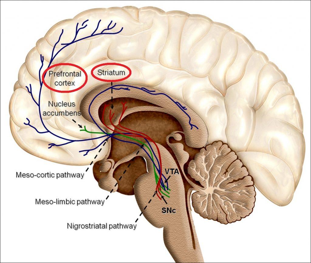 The Neuroscience of Habits – Donders Wonders